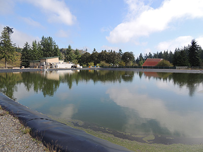Waste activated sludge is pumped into this pond for bacteria to munch on
